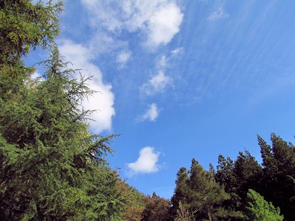 市民の森の「西の望池」