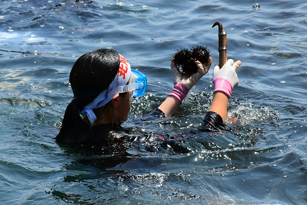 第25回北限の海女フェスティバル 2014